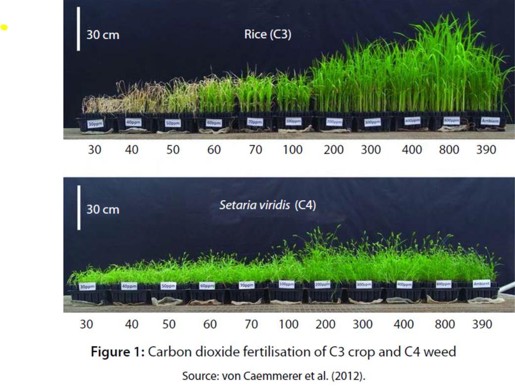 151018-CO2-Ris
