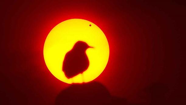 160725-Venus passerar solen